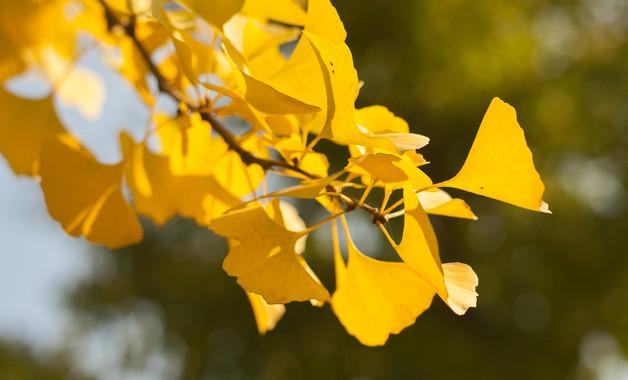 关于秋天的景色的作文